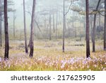 Misty Forest With Flowers On...