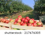 cart full of apples after... | Shutterstock . vector #217676305