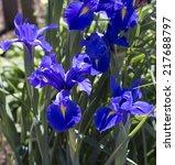 beautiful decorative blue... | Shutterstock . vector #217688797