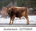 caucasian calf   Shutterstock . vector #217732819