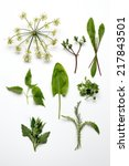 collection of common weeds or... | Shutterstock . vector #217843501