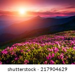 magic pink rhododendron flowers ... | Shutterstock . vector #217904629