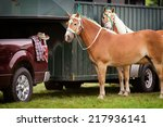 two palomino horses stand...