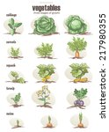 set of vegetables with three... | Shutterstock . vector #217980355
