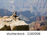 Small photo of Canyon denizen stops to enjoy the view
