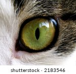 Extreme Close Up Of Green Cat'...
