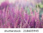 Heather Flowers. Small Violet...
