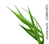 blade of grass isolated on... | Shutterstock . vector #218861851
