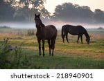 Horses Grazing On Pasture At...
