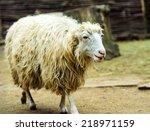 sheep | Shutterstock . vector #218971159