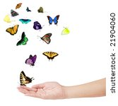 Stock photo hand and colorful butterflies isolated on white 21904060