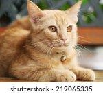 the cat portrait  | Shutterstock . vector #219065335
