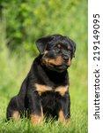 portrait of a nice rottweiler... | Shutterstock . vector #219149095