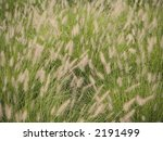 A natural patterned background of some wispy weeds up-close. - stock photo