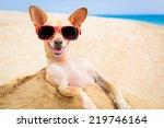 Cool Chihuahua Dog At The Beac...
