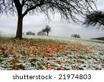Frozen apples under a tree in winter - stock photo