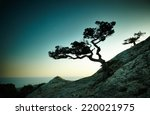 tree and sea at sunset. crimea... | Shutterstock . vector #220021975