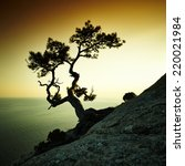 tree and sea at sunset. crimea... | Shutterstock . vector #220021984
