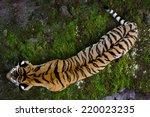 Ussuriyrsky Tiger Most Norther...