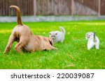 Stock photo dog and two kittens playing together outdoor 220039087