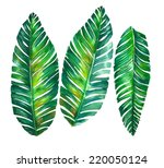 tropical leaves. banana palm... | Shutterstock . vector #220050124