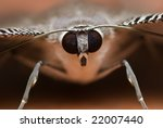 Macro Shot Of A Moth Face To...
