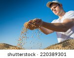 Worker Holding Soy Beans After...
