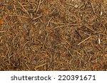 Forest Floor Texture