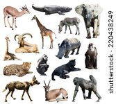 Set Of African Animals On Whit...