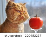 Stock photo funny cat and red tomato 220453237