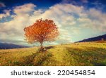 lonely autumn tree against blue ... | Shutterstock . vector #220454854