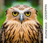 Stock photo owl face close up 220509994