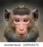 Stock photo monkey face close up 220510171