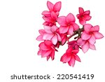 Stock photo pink flowers isolated on white 220541419