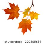 Branch Of Autumn Leaves ...