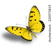 Yellow Butterfly Upper Wing...