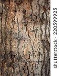 Texture Of A Tree Bark Close Up.
