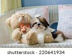 The Cute Puppy Shih Tzu While...