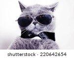 Portrait Of British Shorthair...
