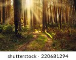 autumn forest  | Shutterstock . vector #220681294