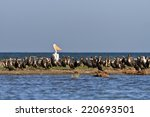 a group of cormorants in the...   Shutterstock . vector #220693501