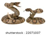 Постер, плакат: Snakes