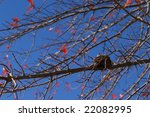 nest in autumn | Shutterstock . vector #22082995