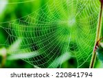 Spider Web Or Cobweb With...