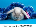 big lop eared rabbit in... | Shutterstock . vector #220875781