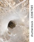 Funnel Web Spider In Web