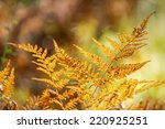 Orange fern leaf close up in autumn with nice bokeh in background  - stock photo