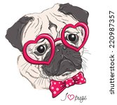 Fashion Portrait Of Pug Dog...