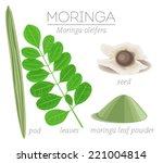 superfood moringa leaves  pod ... | Shutterstock .eps vector #221004814