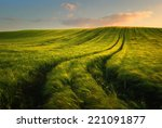 Wheat field landscape with path ...